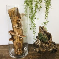 GET CREATIVE WITH GREENERY 🌱🍄 Nature's beauty blooms in all sorts of colors and shapes 💚  Find out more about our ready-to-grow mushroom logs 👉 www.etsy.com/shop/BioMUSHI Log Decor, Wood Logs, Natural Lifestyle, Natural Wood, Greenery, This Is Us, Stuffed Mushrooms, Etsy Seller, Bloom