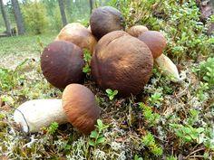 Metsässä mieli lepää, syntyy ideoita ja kaupanpäälle tulee hyvää lähiruokaa. https://www.facebook.com/pages/JUSSAKKA-Oda-K/173696896121402?ref=hl