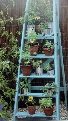 Plant Bookshelf Ladder