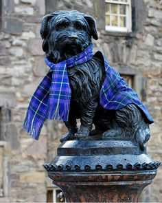 The statue of Greyfriars Bobby wearing a tartan scarf ~ Edinburgh, Scotland.