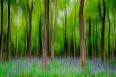 Bluebell Woods | Flickr - Photo Sharing!