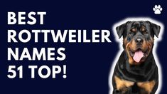 Rottweiler Dog Names 51 BEST & CUTE & TOP Ideas | Names