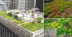 Los techos de Francia se vuelven verdes