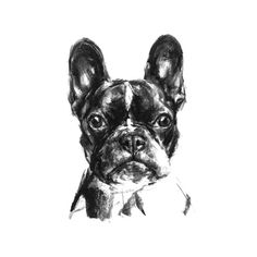 French Bulldog Sketch Print – PaintMyDog | Dog Art | Contemporary Dog Portraits