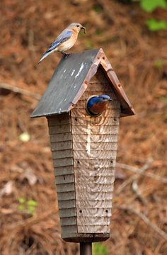 ≗ Feathered Nest of Hope ≗ bird feather & nest art jewelry & decor - blue birds in birdhouse