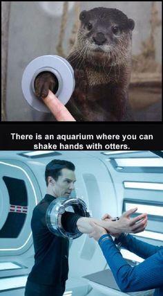 Shake an otter's hand..