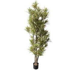 Artificial plant, 6' dracaena reflexa