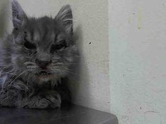 Shiver is only 5 months old!  Looks like she has been through hell and back already!  www.PetHarbor.com pet:NWYK2.A1027920