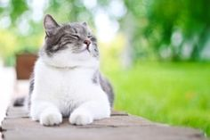 Ingredients and information on how to home make cat food