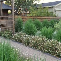 huettl landscape architecture flowers in front, greens in back houzz.com
