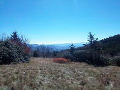 Blue Ridge view from Roan Mtn