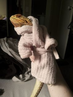 Meet Pringle, a bearded dragon who proves that reptiles can be just as cute and hilarious as cats or dogs. Pringle has lived in Melbourne, Australia for Funny Animal Memes, Cute Funny Animals, Cute Baby Animals, Funny Pets, Bearded Dragon Habitat, Bearded Dragon Funny, Bearded Dragon Costumes, Cute Lizard, Little Lizard