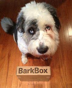 Love Rude Dog!!!  The Tale of Rude Dog's Trashcapades | BarkPost