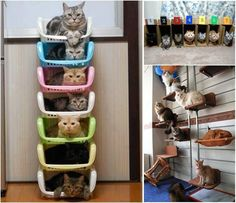 """Cute way to """"organize"""" cats"""