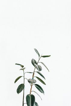 Green. leaves, plant life, decorating with plants, white clean, minimalistic