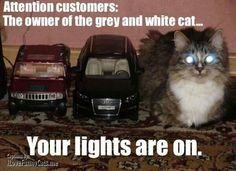 Al dueño del gato gris con blanco, tiene las luces encendidas!