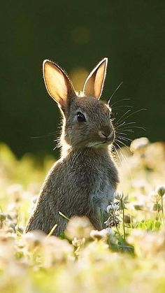 All Things Shabby and Beautiful - Tiere Cute Creatures, Beautiful Creatures, Animals Beautiful, Beautiful Beautiful, Nature Animals, Animals And Pets, Cute Baby Animals, Funny Animals, Tier Fotos