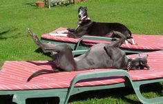 Relaxing....this looks like such greyt fun! :)