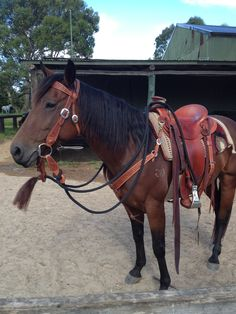 Jane after the Sunday ride. Bridle and Breastcollar by Shaun Lennane, Kent Frecker saddle