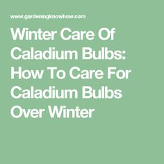 Winter Care Of Caladium Bulbs: How To Care For Caladium Bulbs Over Winter