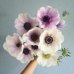 Anemone Bouquet From The Ground My Flower, Fresh Flowers, Spring Flowers, Beautiful Flowers, Anemone Flower, Prettiest Flowers, Anemone Bouquet, Bunch Of Flowers, Cactus Flower