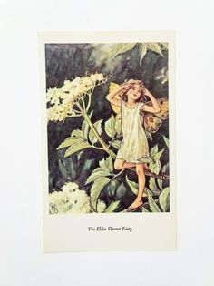 Elder Flower Fairy Picture, Vintage Bookplate, Flower Fairy, nursery art, child's bedroom by PeonyandThistlePaper on Etsy https://www.etsy.com/listing/198287397/elder-flower-fairy-picture-vintage