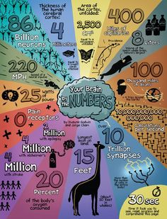Brain facts, by the numbers