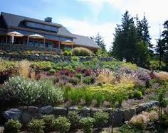 Image result for planting a bank with shrubs