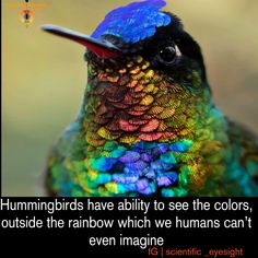 Princeton University evolutionary biologist, and colleagues carried out a series of field experiments with wild broad-tailed hummingbirds near the Rocky Mountain Biological Laboratory in Colorado. The remarkable results revealed the birds could discern spectral-colored feeders from feeders in nonspectral colors.