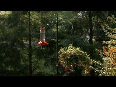 Suggested Placement for your Perky Pet® Hummingbird Feeder