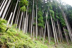 """木を活かし、東京の森と林業を守る!沖倉製材所は次の世代のため「SMALL WOOD TOKYO」に取り組む。Ki wo ikashi, Toukyou no mori to ringyou wo mamoru! Okikura seizaisho wa tsugi no sedai no tame """"Small Wood Tokyo"""" ni torikumu. Dengan memberdayakan kayu, lindungi hutan dan kehutanan Tokyo! Demi generasi berikut, pabrik kayu Okikura berjuang di """"Small Wood Tokyo""""."""