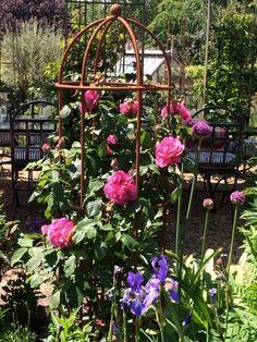 Runner Beans, Herbaceous Border, Obelisks, Outdoor Structures, Rose, Plants, Garden Ideas, Steel, Pink