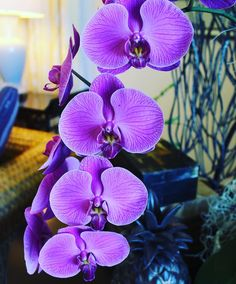 Beauty around every corner! Orchids are abundant here in Hawaii!