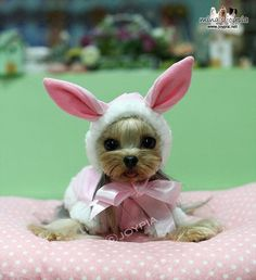 Cutest spring Easter Bunny ever...Wait it's a Yorkie in a rabbit suit~ too cute  ♥