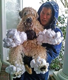 """Great caption in The Sun """"Snow funny ... Kenzie the terrier's paws are encased in ice balls in Seattle"""" -- http://www.thesun.co.uk/sol/homepage/news/4116310/Paw-blimey.html"""