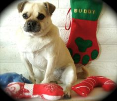 Dog Christmas Paw Stocking and 3 toys by DownUnderDogDesigns, $30.00