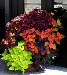 Container Gardening Ideas Back Deck: Who says you need flowers for color? A happy bunch of coleus and sweet potato vine of different varieties. Pinch flowers as they appear on coleus to keep it compact as seen here. Garden Landscaping, Outdoor Gardens, Container Gardening, Planters, Shade Garden, Garden Pots, Plants, Planting Flowers, Garden Inspiration