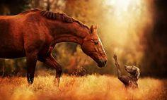 Horse & Dog