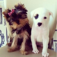 The perfect puppies!