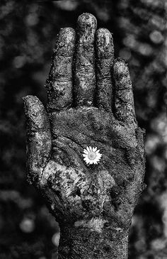"""Hope"" black and white photography by Sarah Treanor Self Portrait hand flower grief fine art photography wall art Etsy for sale Contrast Photography, Hand Photography, Creative Photography, Abstract Photography, Poverty Photography, Photography Aesthetic, Photography Ideas, Hand Fotografie, Belle Photo"