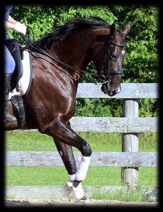 Don't be intolerant of the short rein! Just as with any other movement and technique that is taught to horses, short reins can be very beneficial to the horse when applied correctly. In fact, dropp...