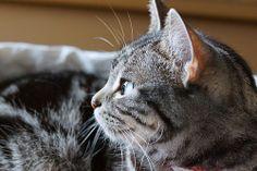 cat #512