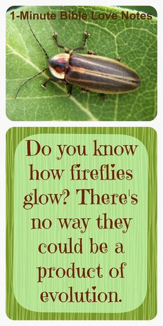 Look at the Firefly