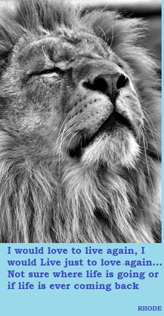 """Lion: """"Ah! The Smells of Africa! Soothing My Soul. And making My Spirit Whole."""" (Written By: © Lynn Chateau. Lion And Lioness, Lion Of Judah, Nature Animals, Animals And Pets, Cute Animals, Lion Pictures, Animal Pictures, Beautiful Creatures, Animals Beautiful"""