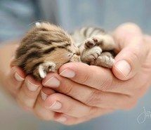 look! Tiny baby kitten...can I have one?