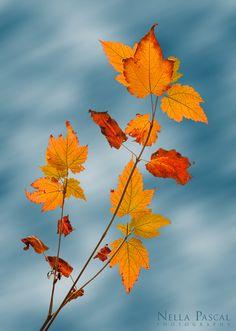 Un lugar donde el otoño no parece una estacion si no un arte