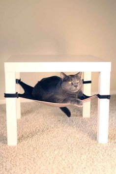 Cat Hammock - w/ link to printable PDF pattern. Made one of these for under the coffee table. Completely ruins the table (we drilled into the legs), so find a different way if you happen to love your table! Ours is old and cheap, so I didn't care at all. I Love Cats, Crazy Cats, Cool Cats, Diy Cat Toys, Pet Toys, Diy Cat Hammock, Cat Hacks, Jolie Photo, Diy Stuffed Animals