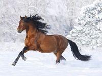 Bellissimo sfondo di Cavallo Selvaggio, con risoluzione 1280 x 1024 categoria Animali Cuccioli per il Desktop del tuo PC. Foto spettacolare, wallpaper bellissimo