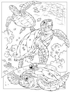 free animal coloring pages for adults | ... this Leatherback Sea Turtle color page | more animal coloring pages