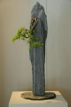 #bonsaitrees Bonsai Art, Bonsai Plants, Bonsai Garden, Garden Planters, Garden Art, Vertical Rock, Mini Bonsai, Bonsai Styles, Ikebana
